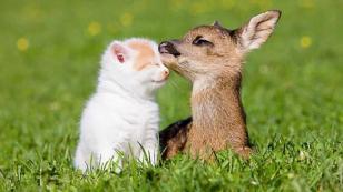 Hayvanlar Alemi