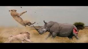 Hayvanların Feci Dövüşü...
