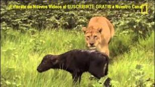 Hayvanlar alemi Belgeseli...