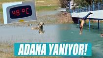 Termometreler 48 Dereceyi Gösterdi, Köpekler Göle Girdi