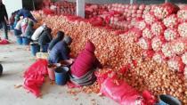 Soğan fiyatını arttırmak için depoya hapsettiler