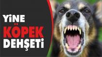 Karı-Koca Köpeğin Saldırısına Uğradı...