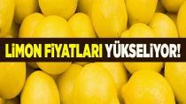 Limonun yükselişi engellenemedi...
