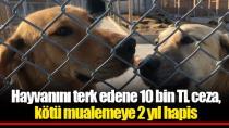 Hayvanını terk edene 10 bin TL ceza, kötü mualemeye 2 yıl hapis!