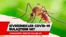 Sineklerle ilgili korkutan koronavirüs açıklaması: Virüsü taşıyabilme riski fazla