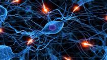 Bilim insanları ilk kez görüntüledi: Beyin kendini nasıl yeniliyor?