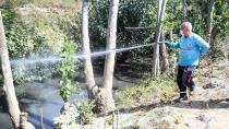 Büyükbaş hayvanları korumak için ilaçlama…