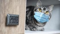 Bir ilk! O da koronavirüse yakalandı...