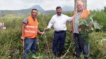 Karaisalı Belediyesi Yabani Ağaçları Aşılıyor