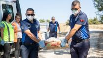 Seyhan Belediyesi hayvanlara da yardım elini uzattı...