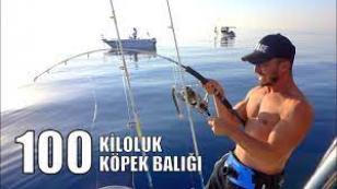 Oltamıza 100 Kiloluk Köpek Balığı Vurdu